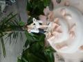 casamento-sonia-canhao