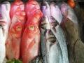 peixe-freco-canhao-2