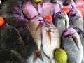 peixe-freco-canhao-4