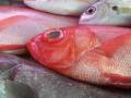 sapateira-peixefresco2